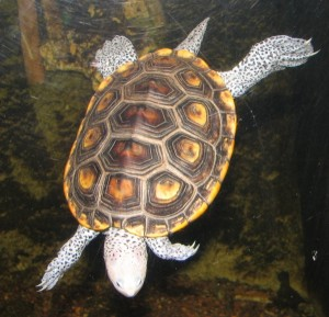 rxy turtle
